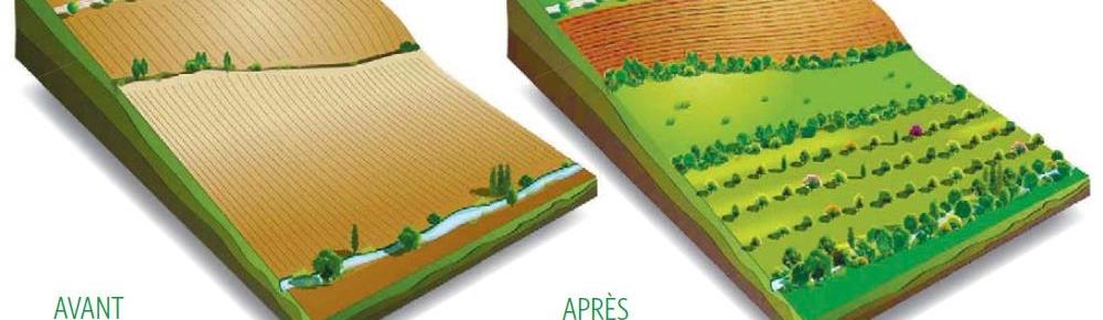 agroforesterie.jpg