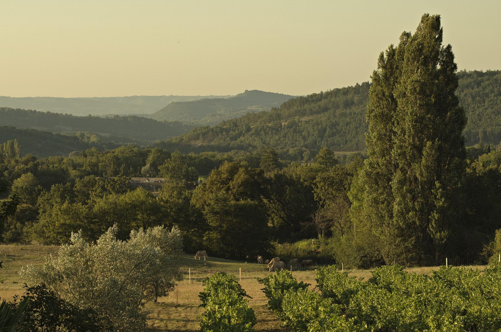 Fontaine Neuve gites et chambres d'hôtes à Lure : vue sur le pays de Forcalquier