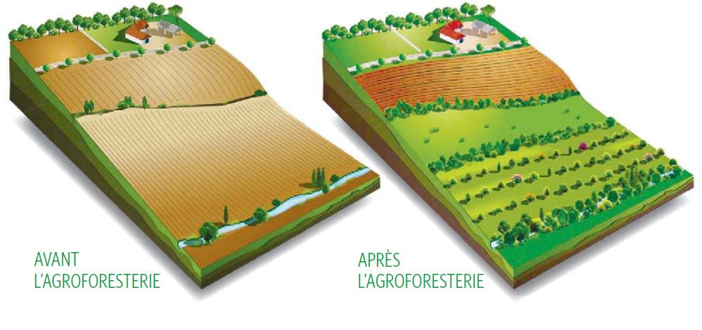 Fontaine Neuve gites et chambres d'hôtes à Lure : ferme écologique, agroforesterie